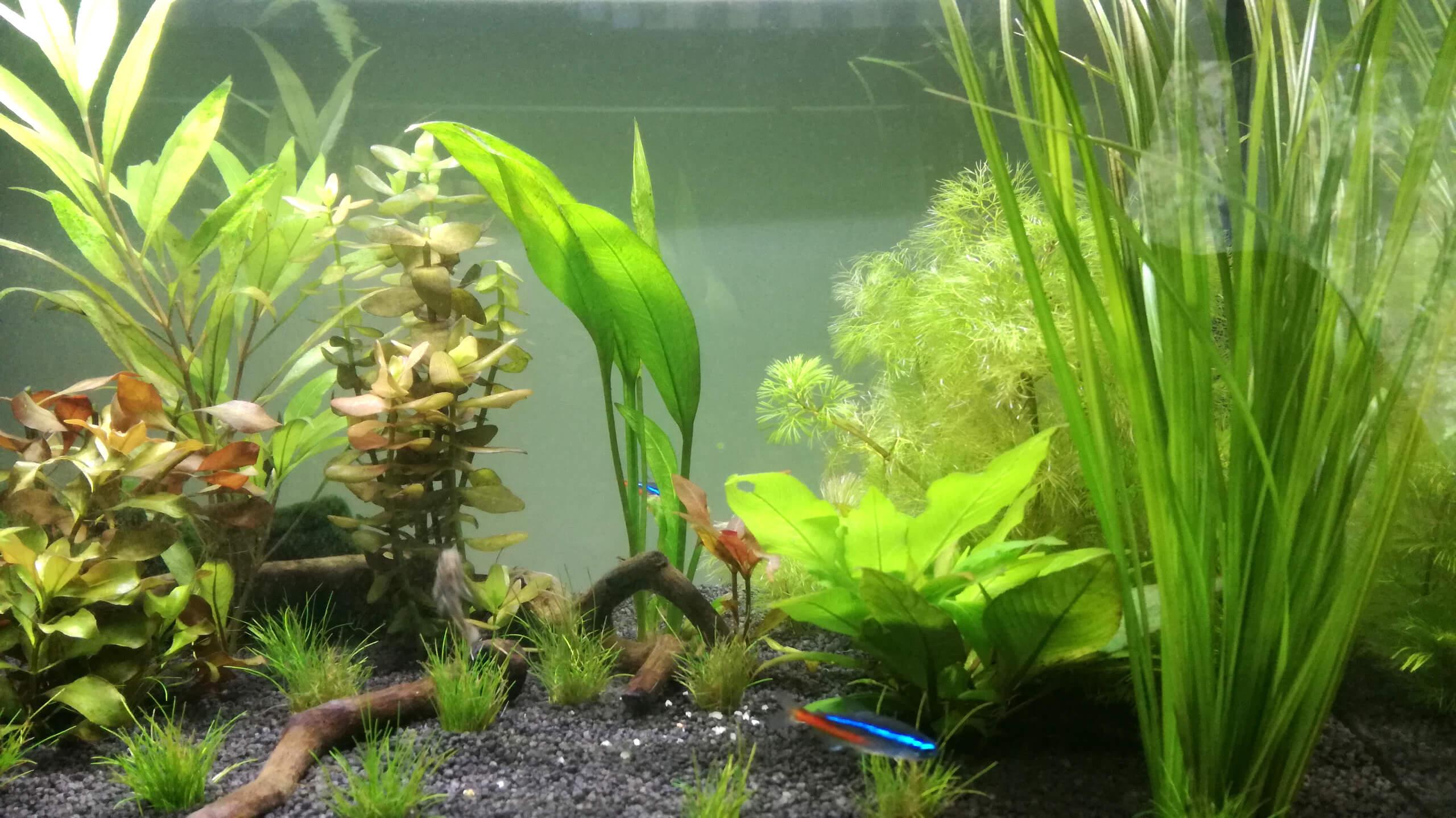 Aquarium Fische Süßwasser Liste : aquarienpflanzen kaufen einsetzen und pflegen s wasseraquarium fische pflanzen deko kosten ~ Watch28wear.com Haus und Dekorationen
