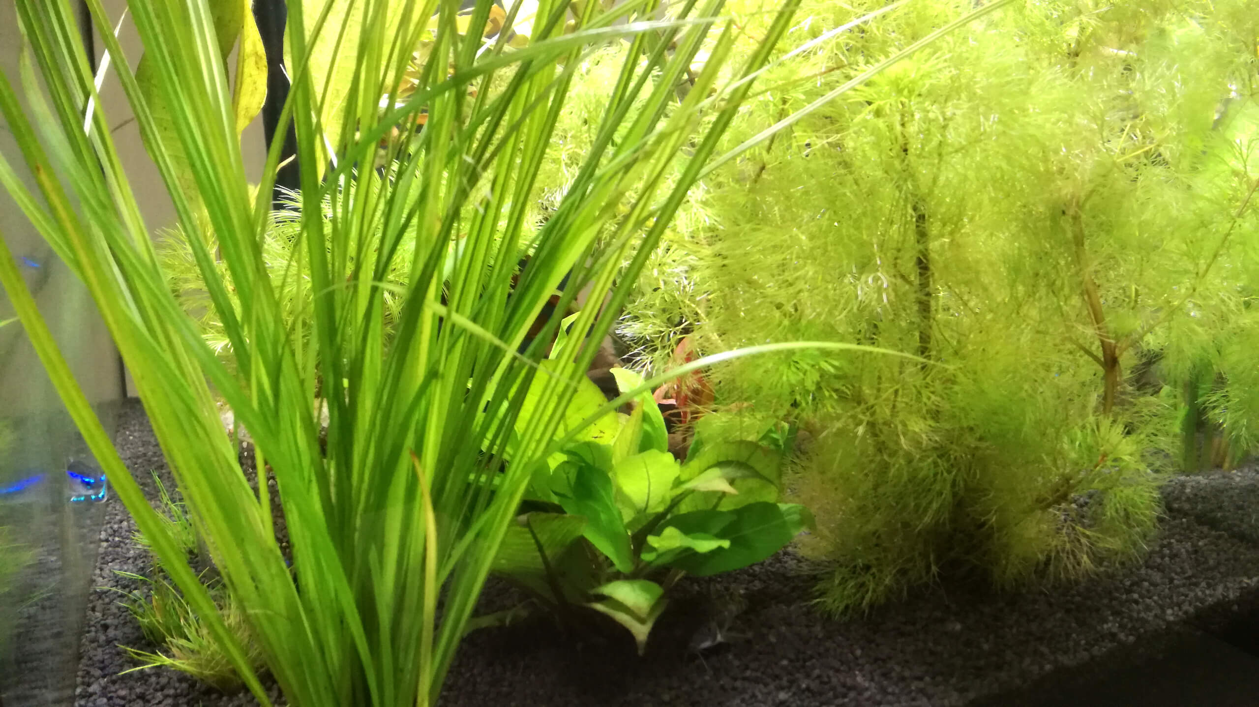 Aquarium bepflanzen