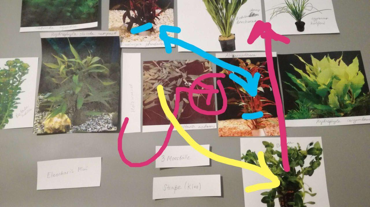 Plan Pflanzen